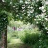 Peaceful garden in Henley open on Sunday 19 May